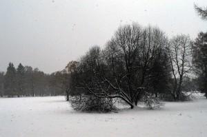 Photo-75